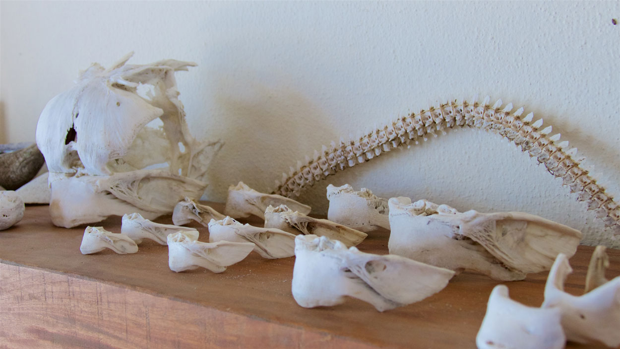 Other objects, such as these blowfish bones, are arranged around the house, imbuing the space with a natural sense of beauty.