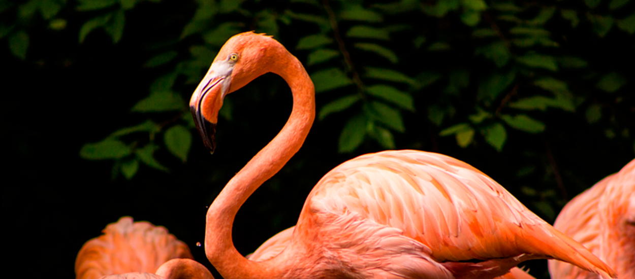 Puerto Vallarta Zoo: Showcasing Wild Nature