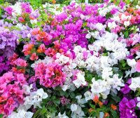 Vallarta Garden Club January Events
